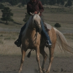 The Art of the Bridle Horse